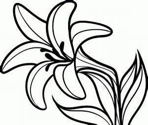 Drawing Flower Lily - ClipArt Best