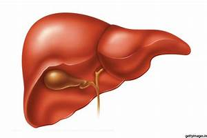 Facts About Human Liver