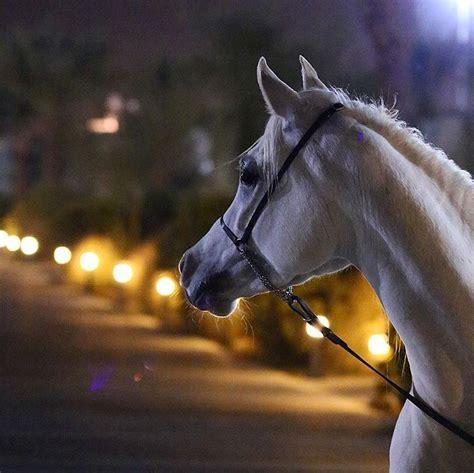 exotic breeds horse animals horses