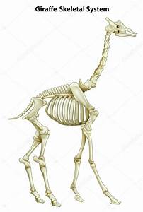 Giraffe Skeleton Diagram