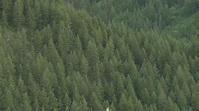 Collins, King Announce $6 Million to Revolutionize Forest ...