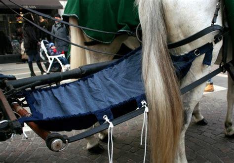 carrozze per cavalli usate finalmente ecco la mutanda equina per cavalli da