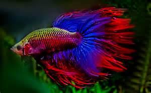 kinderzimmer einrichtung süßwasseraquarium der große überblick zum thema