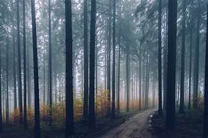 nature, , trees, , road, , path, , forest, , mist, , depth, of, field, hd