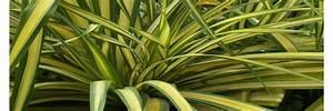 Plante D Intérieur Haute : toutes vos plantes petites et grandes de tr s haute ~ Premium-room.com Idées de Décoration