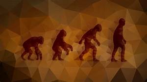 What is evolution?   Facts   yourgenome.org