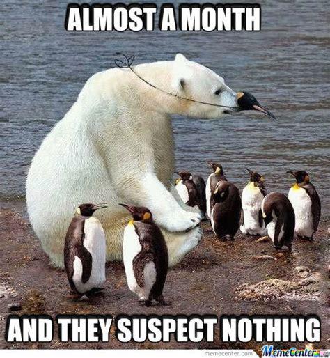 Meme Bear - polar bear memes best collection of funny polar bear pictures