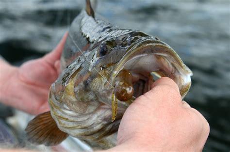 tube trick smallmouth bass