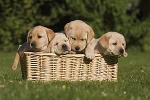 Hundenamen - Passenden, hundenamen finden - hundenamen.de