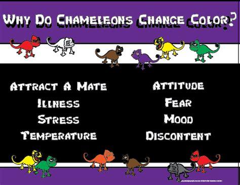 do all chameleons change color why do chameleons change color on behance