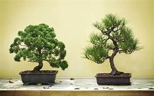 Pflege Von Bonsai Bäumchen : bonsai pflegen und schneiden so bl ht ihr b umchen auf ~ Sanjose-hotels-ca.com Haus und Dekorationen
