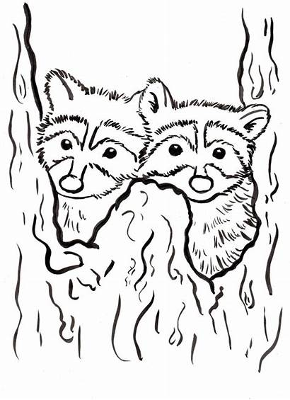 Raccoon Coloring Printable Pages Racoon Track Marine