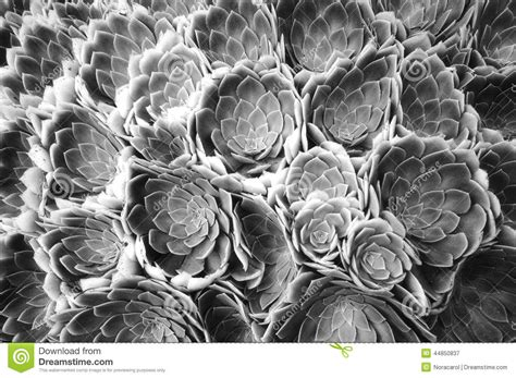 Abstract Flowers Black And White by Black And White Flower Abstract Stock Photo Image 44850837