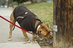 Canine Carhartt Coat for Your Pal