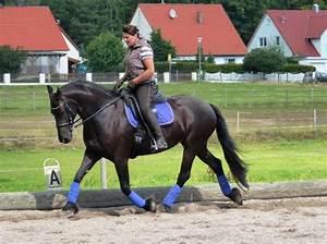 Pferde Kaufen Bremen : berittpferde kleinanzeigen kaufen verkaufen bei deinetierwelt ~ Orissabook.com Haus und Dekorationen