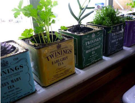 windowsill herb garden how to create a windowsill herb garden thinking inside the box