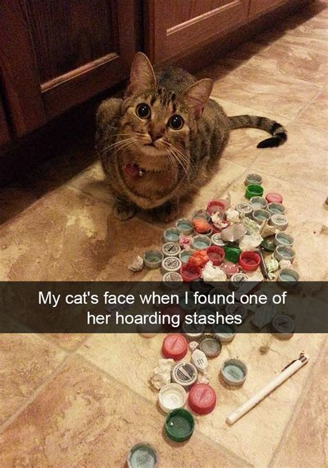 hilarious cat snapchats     day