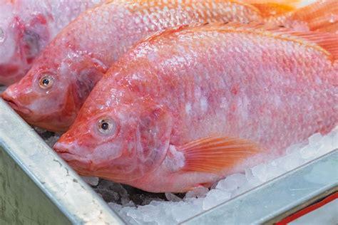 Nah, itulah aneka masakan ikan nila yang cocok untuk lauk di rumah. Resep Ikan Nila Bakar Pedas Manis yang Mantap Bumbunya