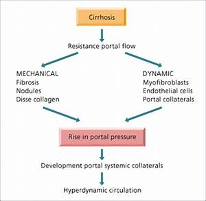 9 The Hepatic Artery, Portal Venous System and Portal ...