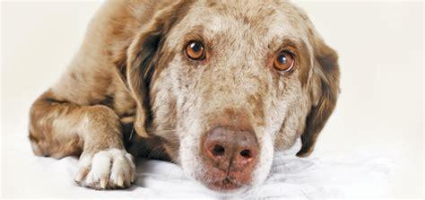 dogs experience pain peoria az arrowhead pooper
