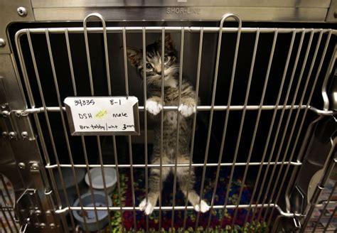 cute dogs cats await adoption   utah valley