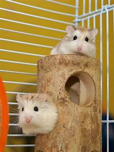 49 best HAMSTER AND HAMSTER CAGES!!! images on Pinterest ...