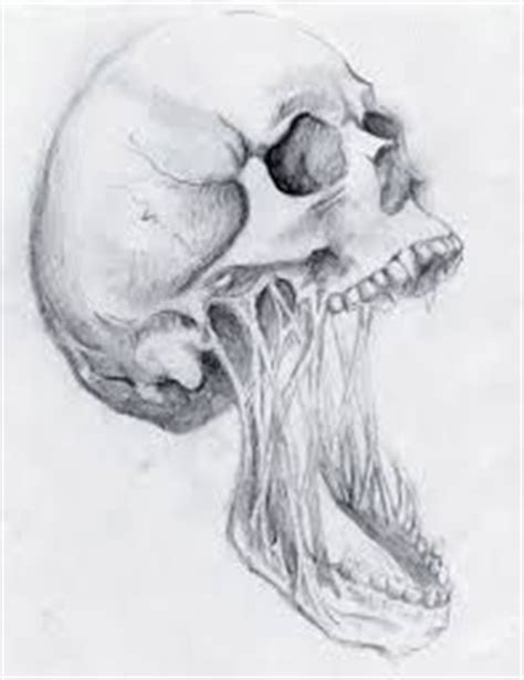 Images About Skulls Pinterest Skull Drawings
