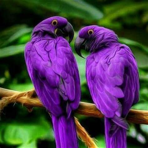 similiar purple macaw keywords