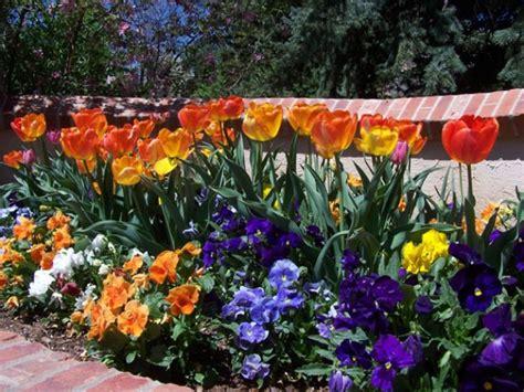 low maintenance landscaping plants