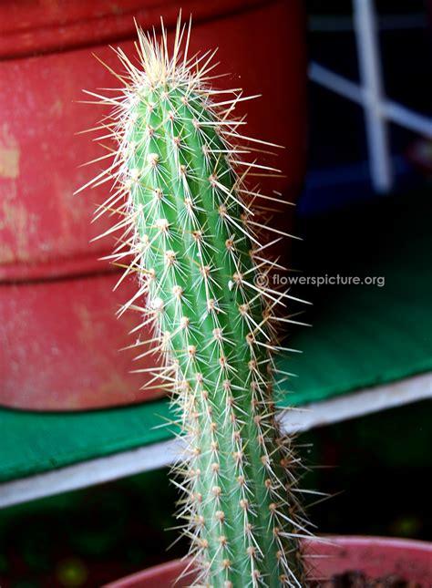 cactus varieties photos cactus varieties