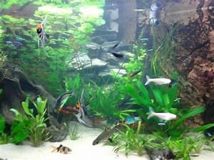Artikel over plantverzorging - alles over het aquarium