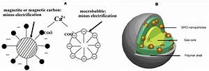 Applications Of Magnetic Microbubbles For Theranostics