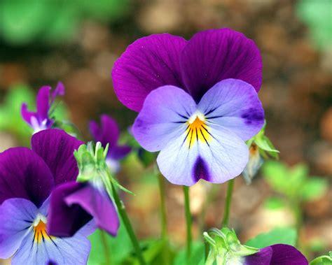 flowers  macro beautiful flower photography