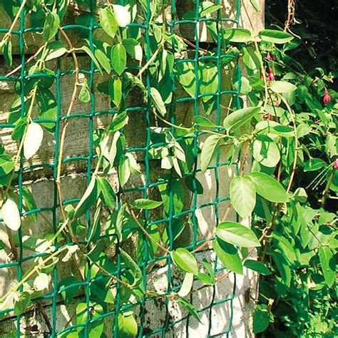 climbing plant support mesh mm  mm    wide