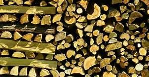 Holzstamm Richtig Trocknen : brennholz richtig trocknen tipps und tricks ~ Eleganceandgraceweddings.com Haus und Dekorationen
