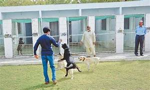 Training, breeding unit for sniffer dogs opens - Pakistan ...