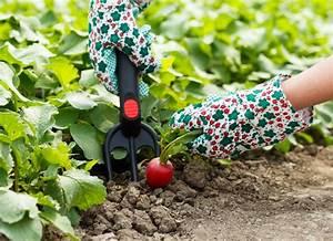 Wann äpfel Ernten : radieschen ernten wann ist der richtige zeitpunkt ~ Lizthompson.info Haus und Dekorationen
