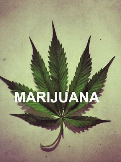 Marijuana Weed Cannabis Animated Candy Grifos Smoke