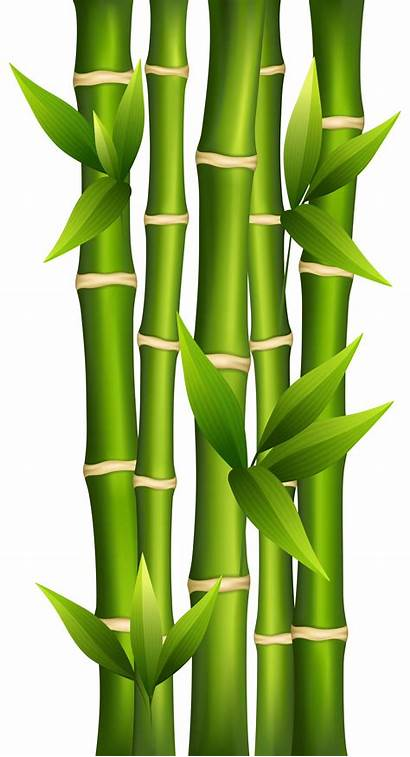 Bamboo Drawing Clipart Japanese Painted Tattoo Clipartbarn