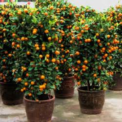 Online Buy Wholesale Planting Fruit Trees From China