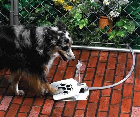 dog push pedal water fountain doggie fountain