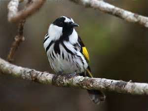 Bright Yellow Bird with Black and White Wings