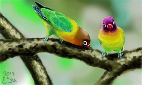 colors  black masked lovebirds  erinu