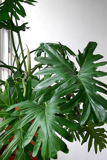 house plant identification identifying house plants