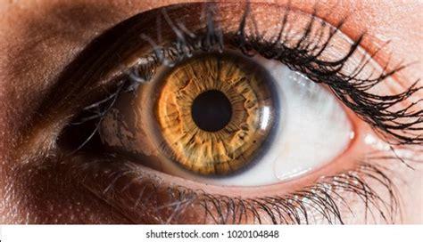 hazel eyes images stock  vectors shutterstock