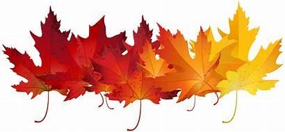 Leaves Autumn Transparent Clip Clipart Colours Fall