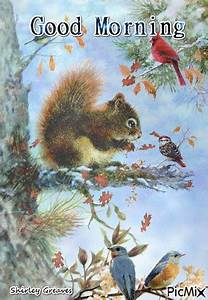 morning squirrel with birds pictures photos and