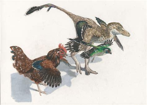 dinosaur family tree reveals insight  rapid