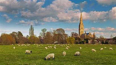Bing Salisbury Sheep Cathedral England Flock Grazing