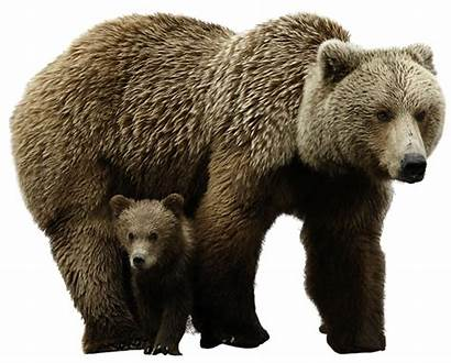 Bear Icon Transparent Background Polar Web Icons